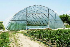 گلخانهها و صنعت گل و گیاه